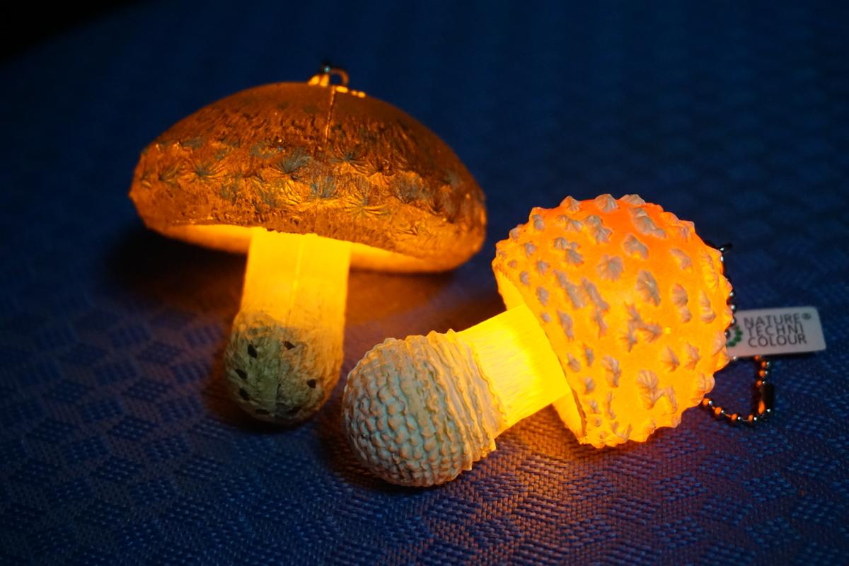 LEDで光る魔法のきのこ、手前がベニテングタケ。奥は椎茸。