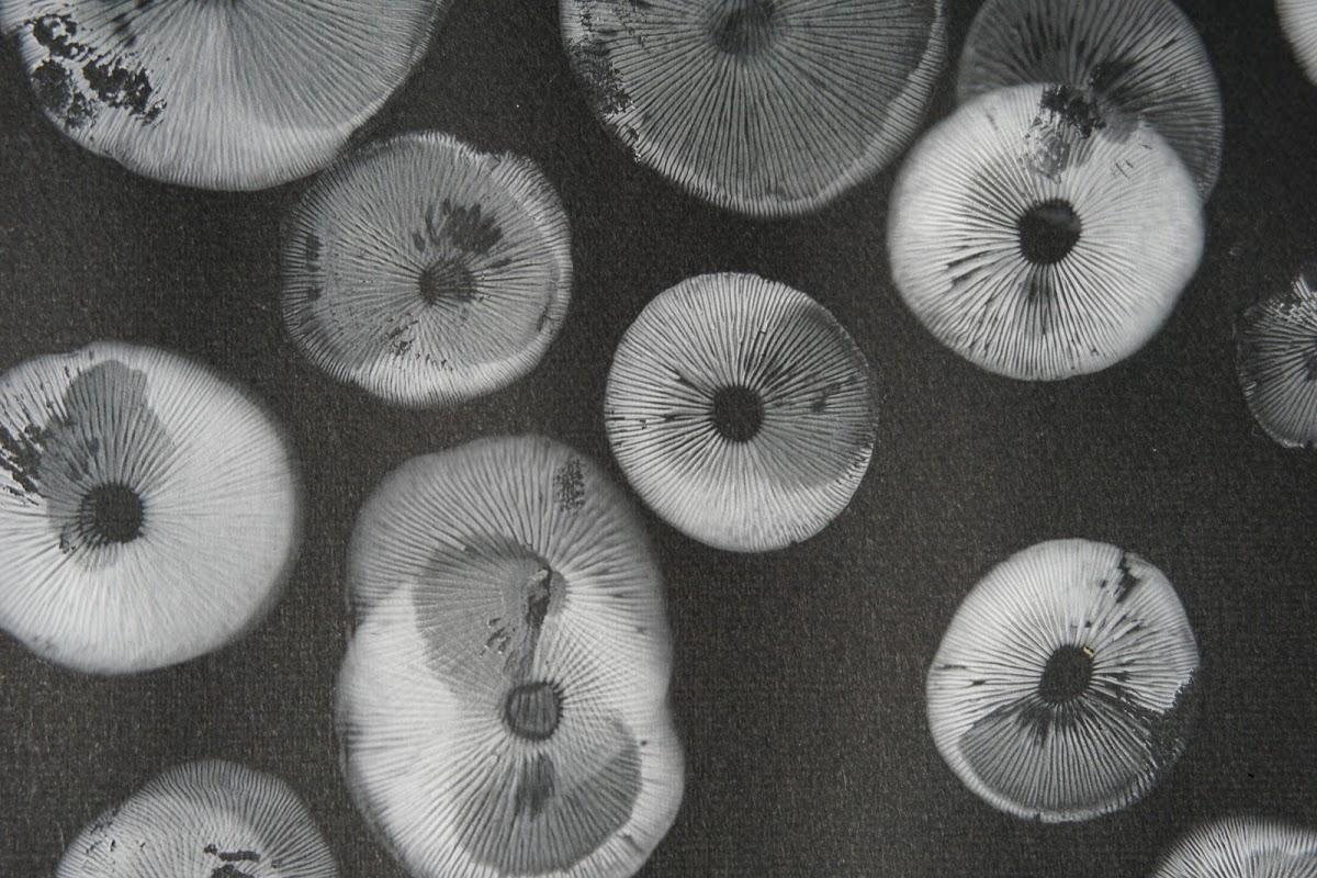 きのこリウムで胞子紋