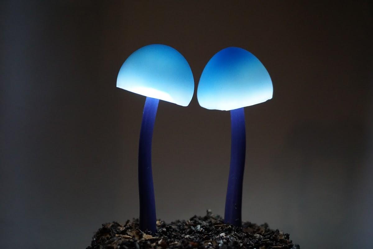 青いきのこランプ コンイロイッポンシメジ