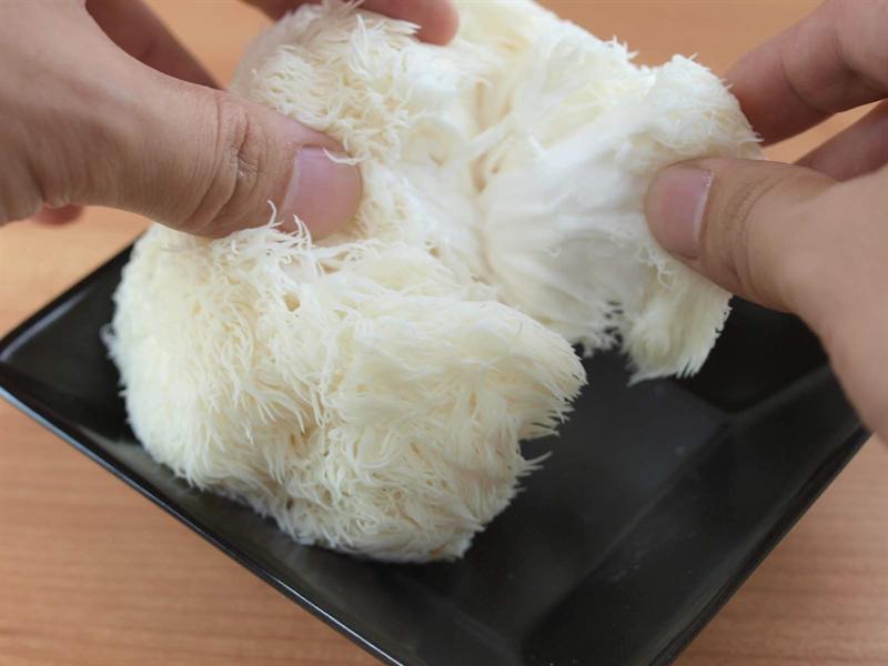 ヤマブシタケは手で簡単に割ける
