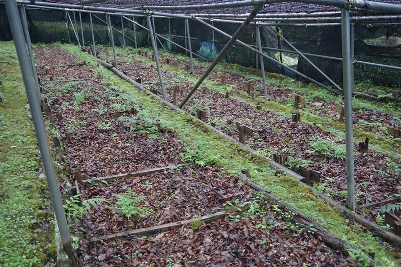 原木栽培の様子