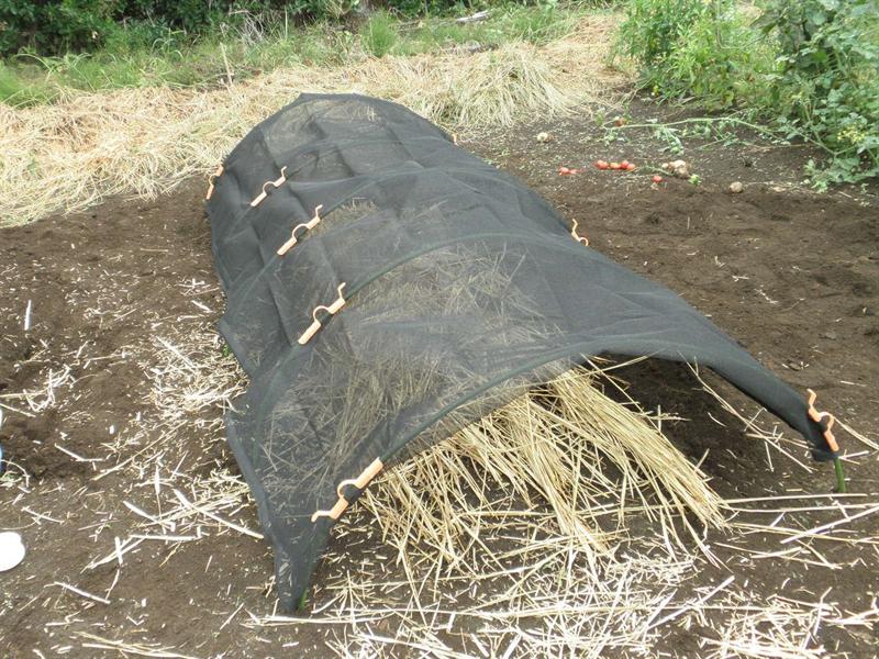 自宅で原木舞茸栽培