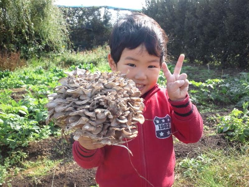 露木の子供と原木舞茸