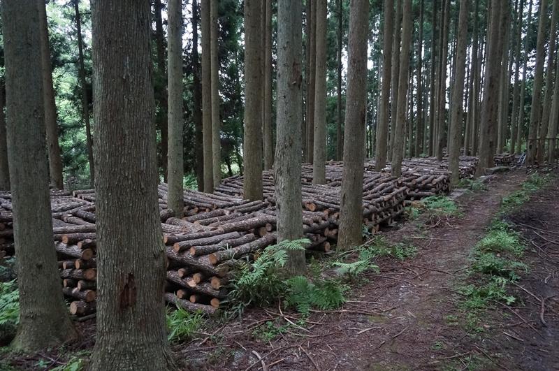 原木栽培:棒積み