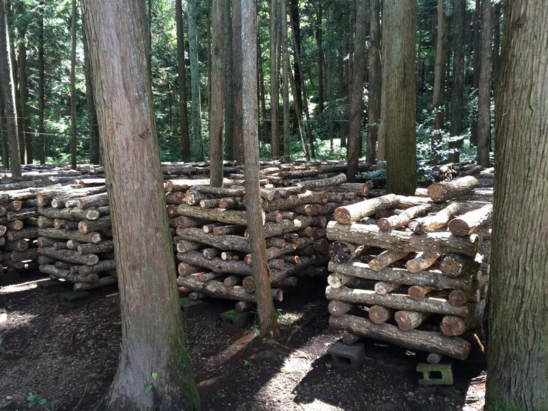 原木栽培:井桁積み