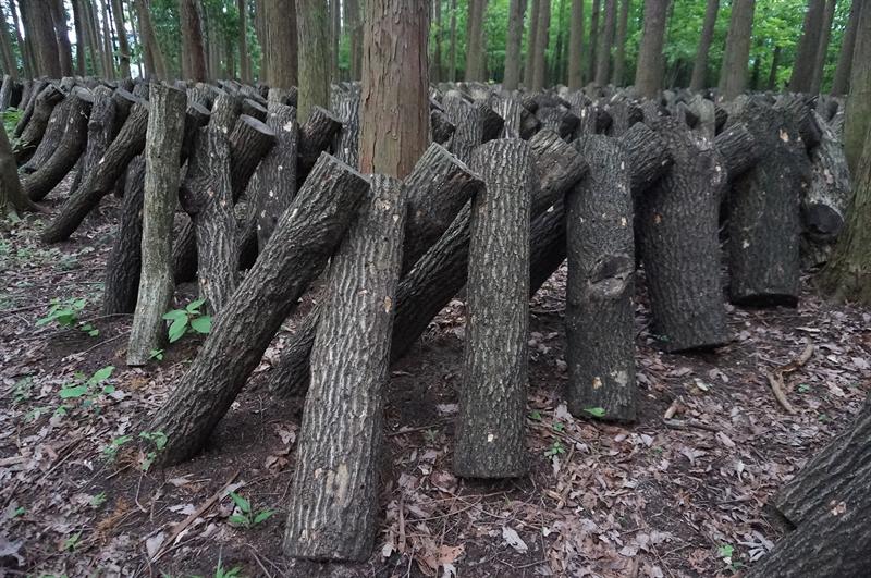 原木栽培:むかで伏せ