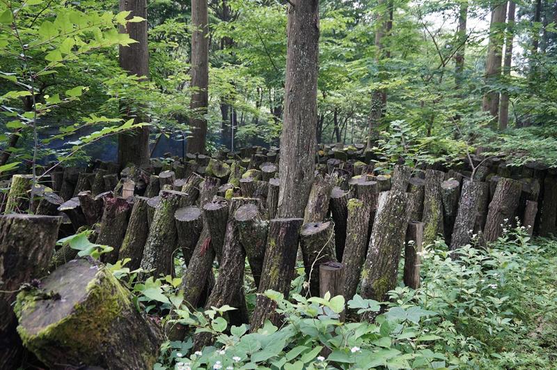 原木栽培の風景