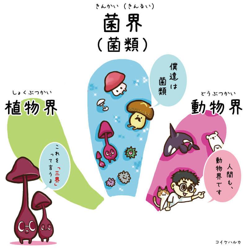菌界・動物界・植物界