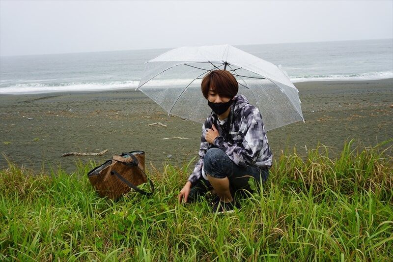 海浜植物の周囲できのこを探す和田匠平さん