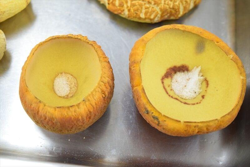 アカヤマドリの管孔(かんこう)