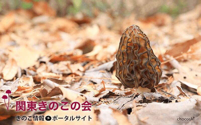 https://cdn-ak.f.st-hatena.com/images/fotolife/k/kanto-kinoko/20211016/20211016212211.jpg