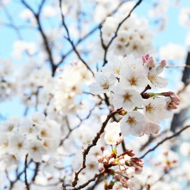 f:id:kanwa-shisei:20190423185632j:image