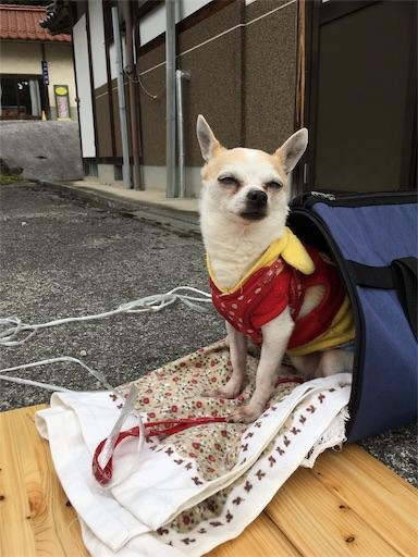 f:id:kanzakisatuki:20190428211624j:image