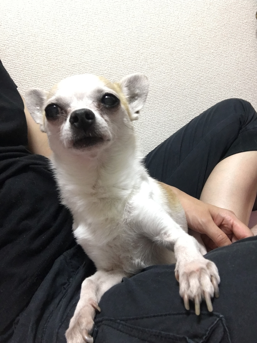 f:id:kanzakisatuki:20190829002202j:plain