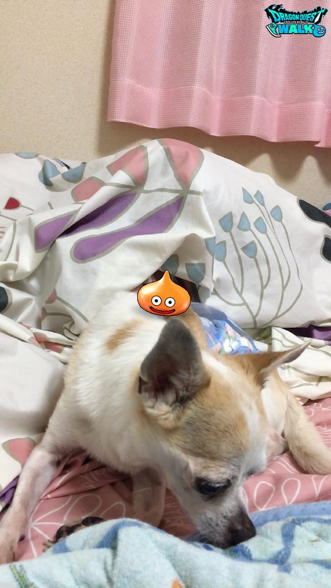 f:id:kanzakisatuki:20190912204534p:plain