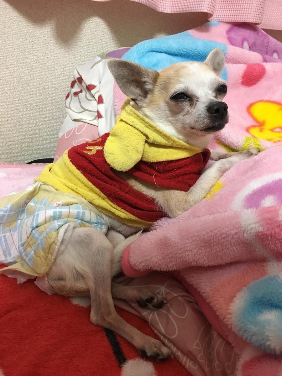 f:id:kanzakisatuki:20191230231518j:plain