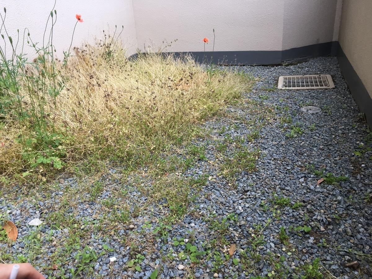 f:id:kanzakisatuki:20210509205036j:plain