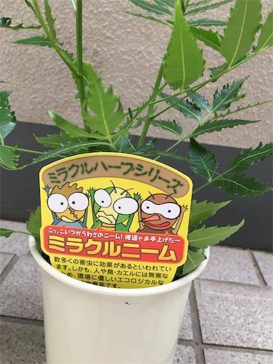 f:id:kanzakisatuki:20210602074708j:image