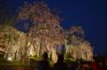 『京都新聞写真コンテスト はんなり夜桜』