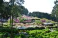 『京都新聞写真コンテスト ツツジのジオラマ・三室戸寺』