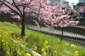 『京都新聞写真コンテスト 淀の春』