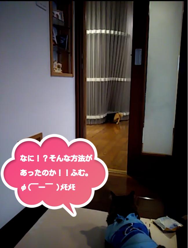 f:id:kaochan0801:20180306080630p:plain