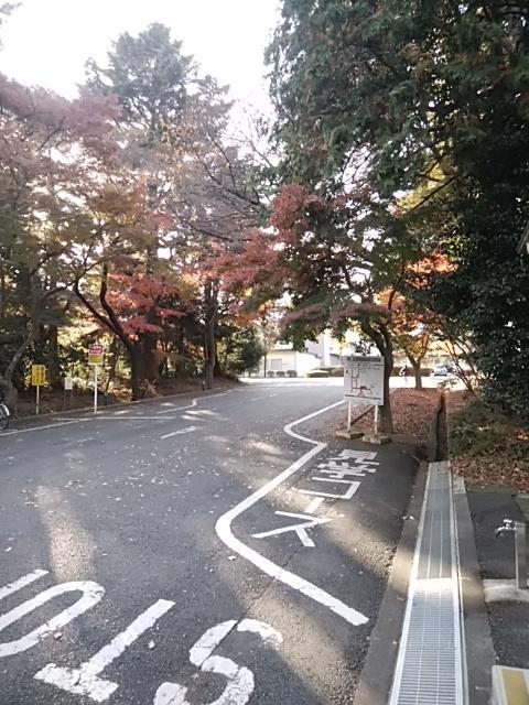 f:id:kaon-yokegawa:20181201141934j:plain
