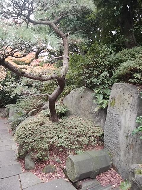 f:id:kaon-yokegawa:20181216112023j:plain