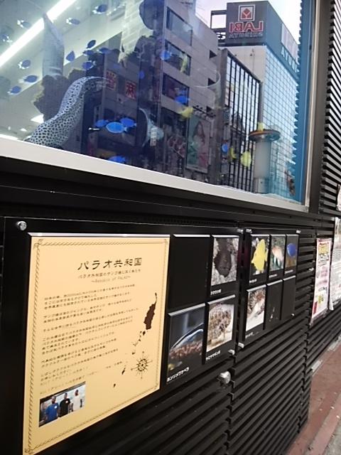 f:id:kaon-yokegawa:20181216154055j:plain