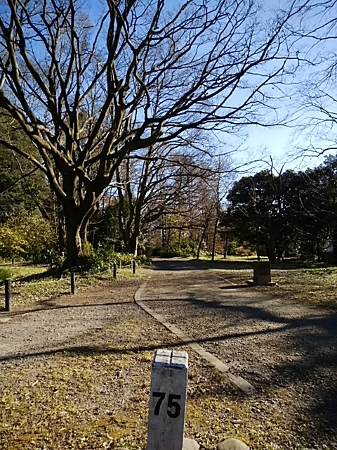f:id:kaon-yokegawa:20181228133752j:plain