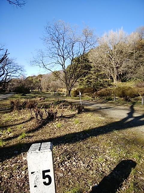 f:id:kaon-yokegawa:20181228133816j:plain