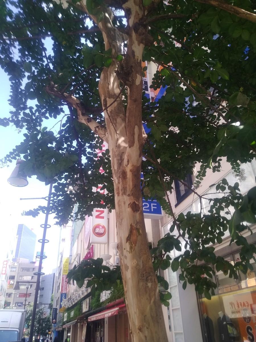 f:id:kaon-yokegawa:20190920111047j:plain