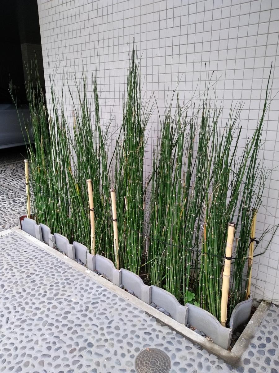 f:id:kaon-yokegawa:20200308105605j:plain