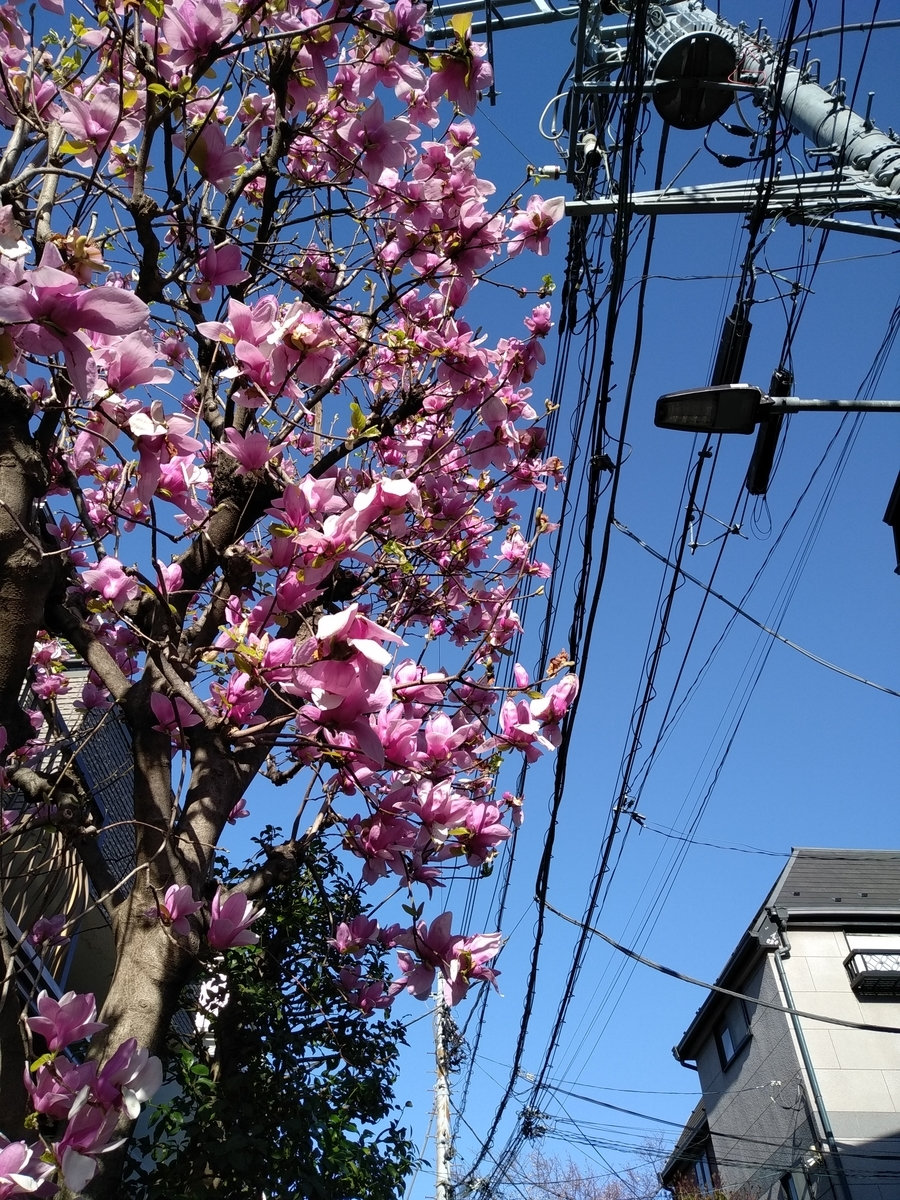 f:id:kaon-yokegawa:20200320154449j:plain