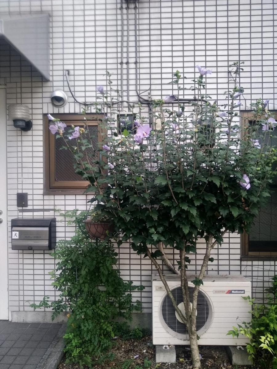 f:id:kaon-yokegawa:20200321163607j:plain