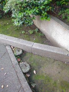f:id:kaon-yokegawa:20200513065920j:plain