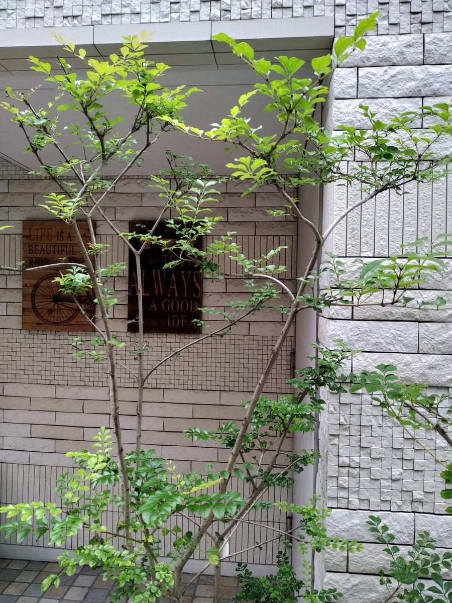 f:id:kaon-yokegawa:20200630091341j:plain