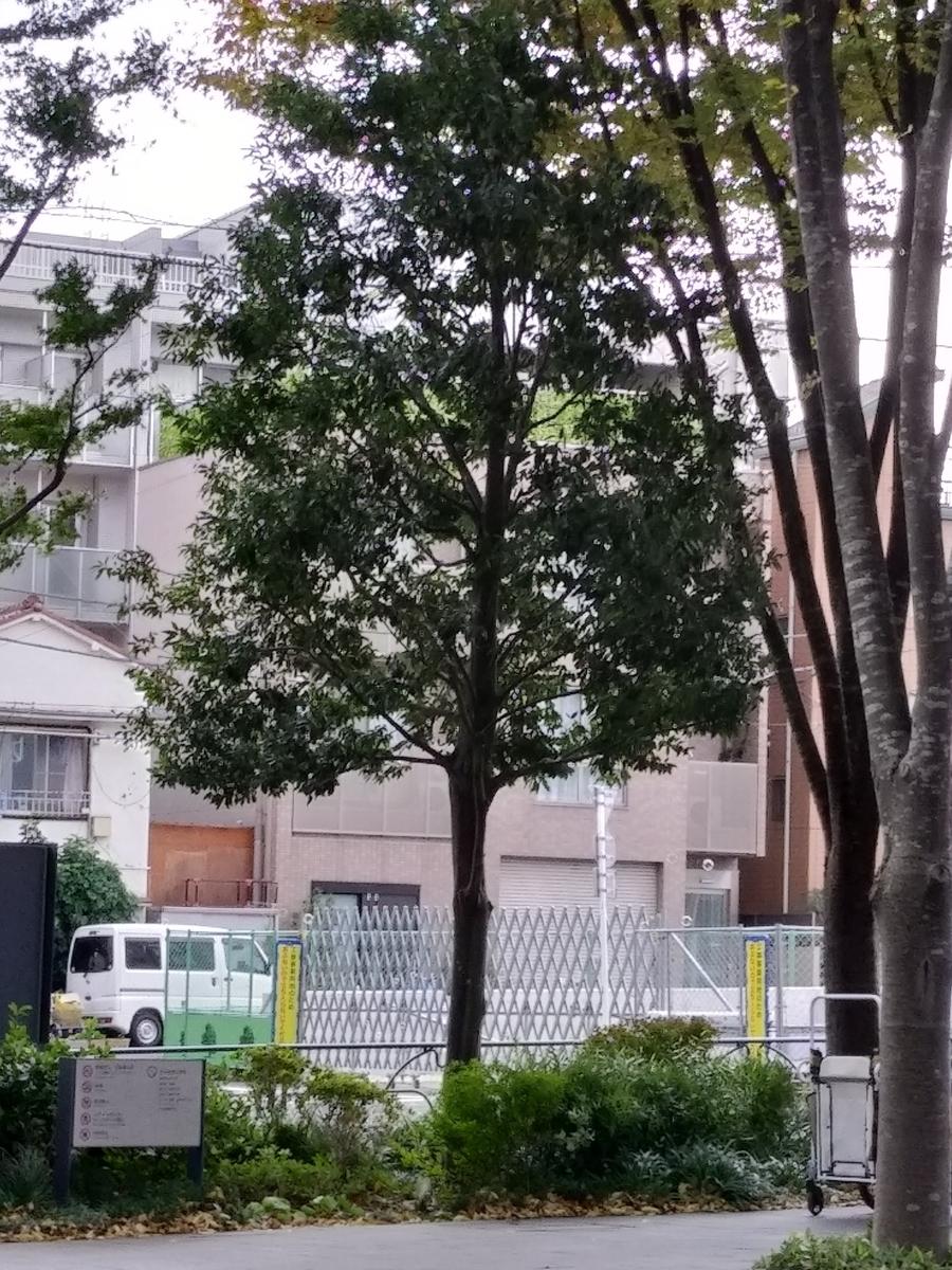 f:id:kaon-yokegawa:20201120103707j:plain