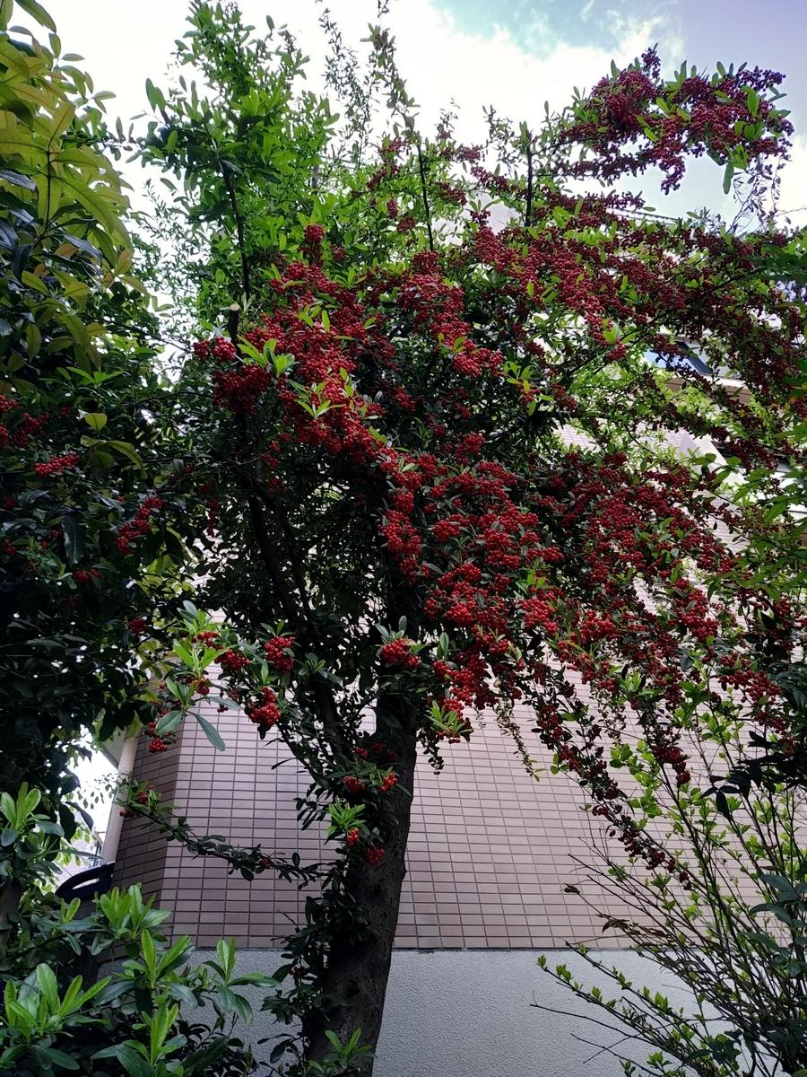f:id:kaon-yokegawa:20210411140828j:plain