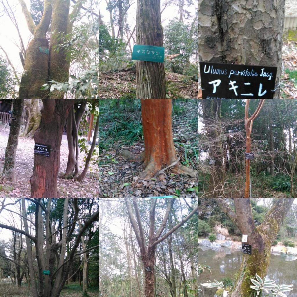 f:id:kaori-makimaki:20170215222555j:plain