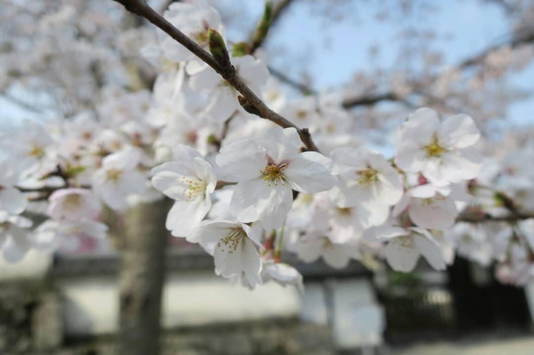 f:id:kaori-makimaki:20190407202011j:plain