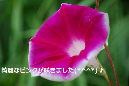 f:id:kaori-ri:20160806120632j:plain