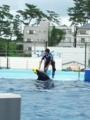[twitter] イルカ「渡さないぞ」