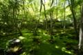 京都新聞写真コンテスト 祇王寺『若草色の世界①』