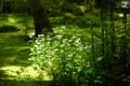 京都新聞写真コンテスト 祇王寺『若草色の世界④』