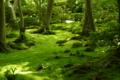 京都新聞写真コンテスト 祇王寺『若草色の世界③』
