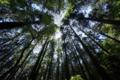 京都新聞写真コンテスト 高山寺『樹木の集中線』