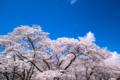 京都新聞写真コンテスト 京都府立植物園『青空を背景に その1』