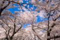 京都新聞写真コンテスト 京都府立植物園『青空を背景に その2』