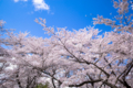 京都新聞写真コンテスト 京都府立植物園『青空を背景に その3』